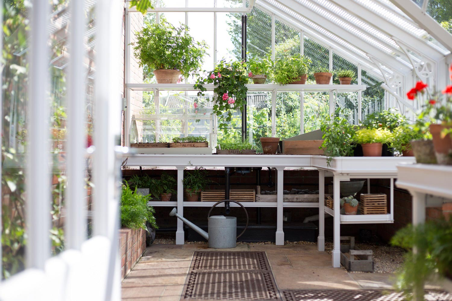 Benching inside lean-to greenhouse (Alitex greenhouse accessories)
