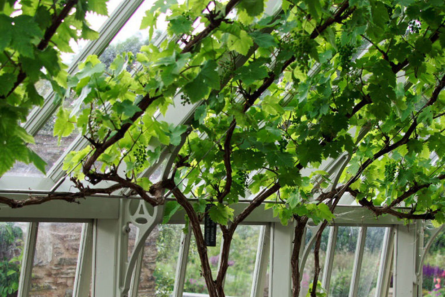 Fruit supports (Alitex greenhouse accessories)