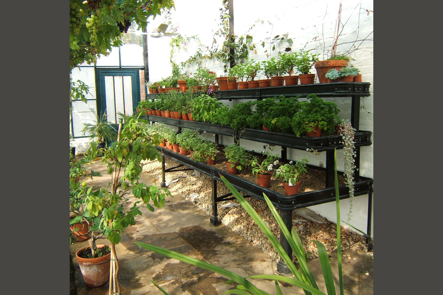 Tiered benching for glasshouse (Alitex greenhouse accessories)