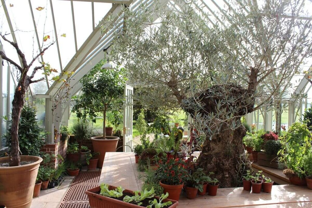 Inside the Lime Wood Greenhouse