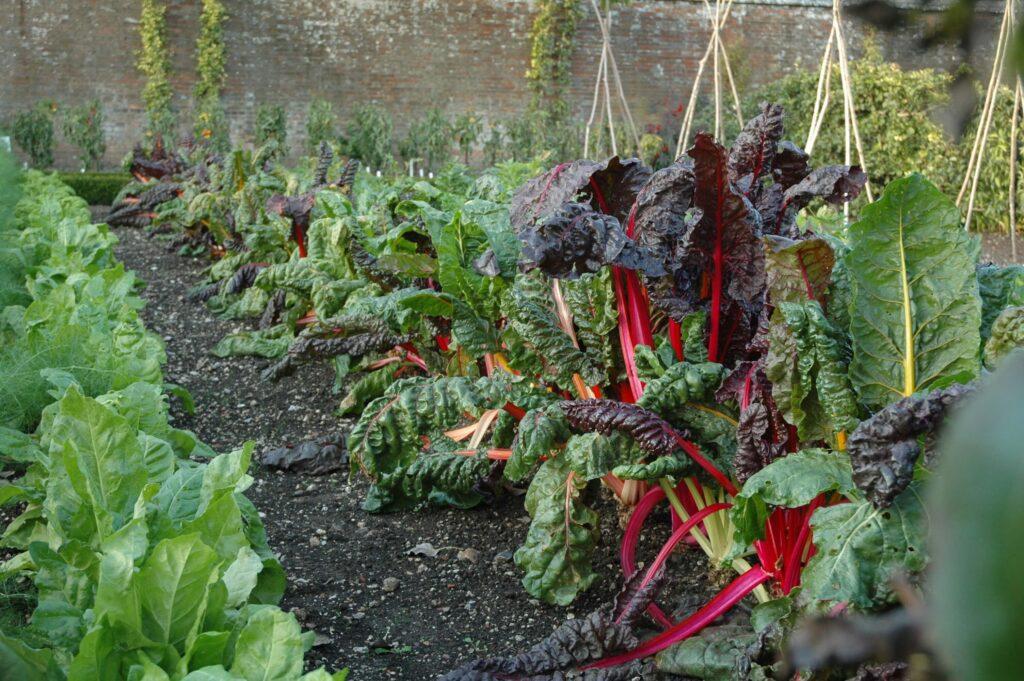 Autumn vegetable plot