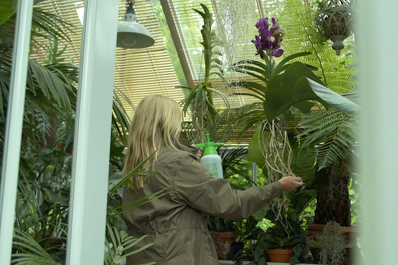 Customer watering in the greenhouse