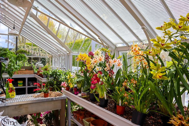Orchids in an Alitex Lean to Greenhouse